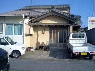 japandogcats